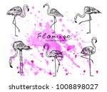 vector sketch style flamingos... | Shutterstock .eps vector #1008898027