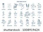best medicinal herbs for fever. ... | Shutterstock .eps vector #1008919624