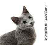 Stock photo russian blue cat 100893844