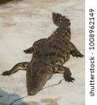 crocodile saltwater thailand.... | Shutterstock . vector #1008962149