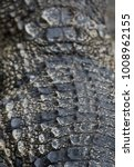 crocodile saltwater skin. hi res | Shutterstock . vector #1008962155