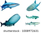 sharks isolated on white. grey... | Shutterstock . vector #1008972631