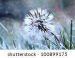 A Dandelion Seed Head With A...