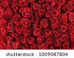 natural red roses background | Shutterstock . vector #1009087804