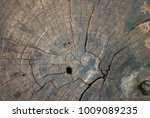 patterns and textures of wood...   Shutterstock . vector #1009089235