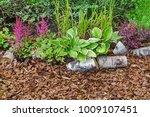 mulched backyard garden or park ... | Shutterstock . vector #1009107451