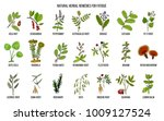 best medicinal herbs for... | Shutterstock .eps vector #1009127524