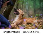 happy dog laying on ground in... | Shutterstock . vector #1009155241