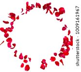 Stock photo red rose petals fly in a circle the center free space for your photos or text isolated white 1009161967