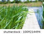 summer river sunny weather... | Shutterstock . vector #1009214494