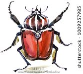 beetle. insect watercolor... | Shutterstock . vector #1009257985