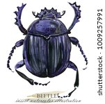 beetle. insect watercolor... | Shutterstock . vector #1009257991