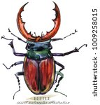 beetle. bug insect watercolor... | Shutterstock . vector #1009258015
