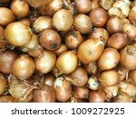 onion harvest. many onions.... | Shutterstock . vector #1009272925