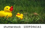 Yellow Rubber Duck And The...