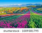 panoramic flower gardens... | Shutterstock . vector #1009381795