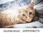 Stock photo ginger cat on the bed 1009458274