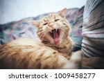 Stock photo ginger cat on the bed 1009458277