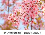 spring border abstract blured... | Shutterstock . vector #1009460074