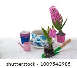 planting pink hyacinths with... | Shutterstock . vector #1009542985