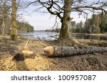 a large tree that has been cut... | Shutterstock . vector #100957087