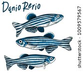 Hand drawn vector danio rerio fish isolated on white background