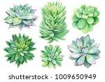 set of succulents  green... | Shutterstock . vector #1009650949