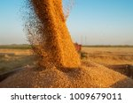 close up view of combine...   Shutterstock . vector #1009679011