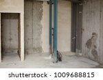 apartment repair wall repair... | Shutterstock . vector #1009688815