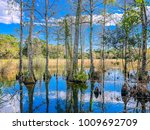 Landscape Of Big Cypress...