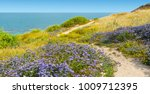 dunes on the shore of the... | Shutterstock . vector #1009712395