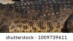 crocodile saltwater skin. hi res | Shutterstock . vector #1009739611