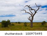 Dead Tree In National Park
