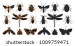vector sketch set of insect on... | Shutterstock .eps vector #1009759471