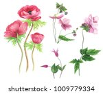 set of pink flowers  anemones... | Shutterstock . vector #1009779334
