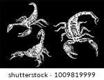 graphical scorpions isolated on ... | Shutterstock .eps vector #1009819999
