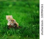Two Little Cats In Wicker...