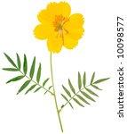 beautiful yellow flower and... | Shutterstock . vector #10098577