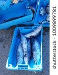 freshly caught mackerel fish in ... | Shutterstock . vector #1009899781
