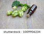 hop cones  humulus essential... | Shutterstock . vector #1009906234