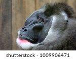 drill close up portrait   Shutterstock . vector #1009906471