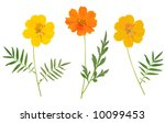 beautiful flower arrangement  ... | Shutterstock . vector #10099453