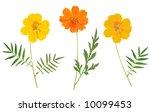 beautiful flower arrangement  ... | Shutterstock . vector #10099453