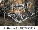 Frozen Cobweb In Winter