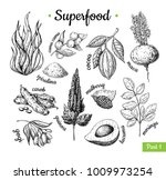superfood hand drawn vector... | Shutterstock .eps vector #1009973254