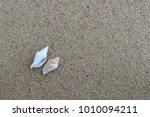 fossil shell on the sand beach  ... | Shutterstock . vector #1010094211