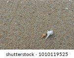 fossil shell on the sand beach  ... | Shutterstock . vector #1010119525