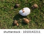 white tiny rabbit surround by... | Shutterstock . vector #1010142211