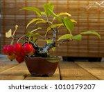 Little Red Apple   Leaf On...