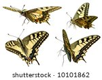 Swallowtail In Different...